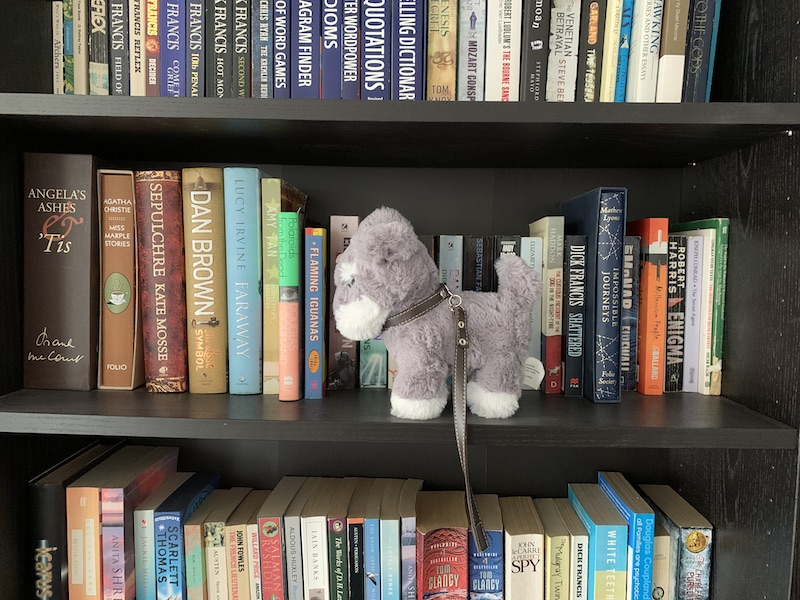 Grey to dog on bookshelf